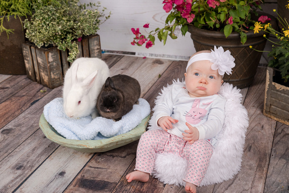 Bunny Photos inside with a studio backdrop, fresh flowering plants and young kids and children laughing and holding bunnies for Easter Photos