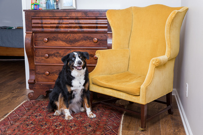 Portrait of a Boy and his dogs on a yellow chair.  The before and after edits in photo shop of a composited image