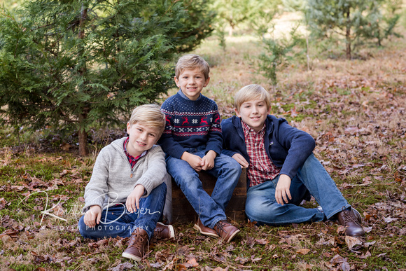 Fall photo shoot at a Christmas Tree Farm with 3 blond haired brothers posing on a wooden box with. christmas trees in the background.